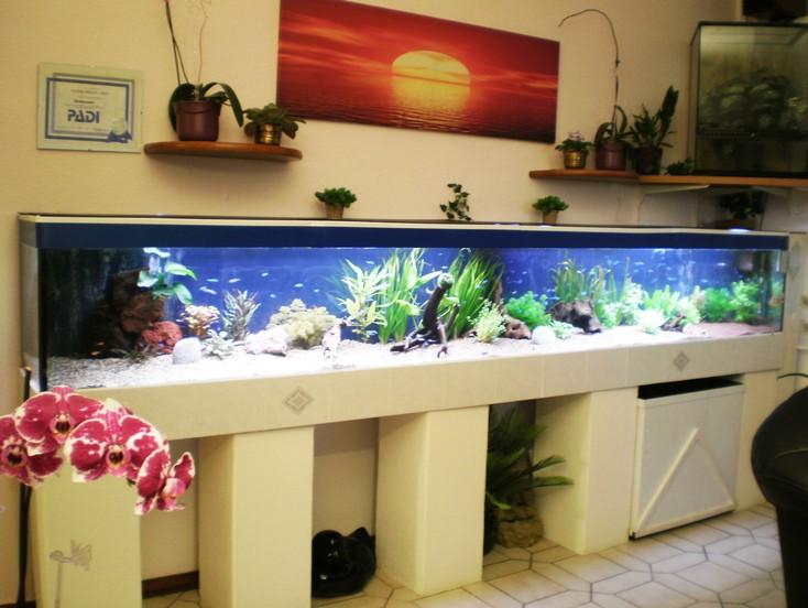 aktuelles aquarium l beck und technischer geb udedienst sielaff. Black Bedroom Furniture Sets. Home Design Ideas